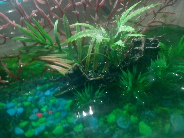 Green and black rocks with newt tank and shipwreck