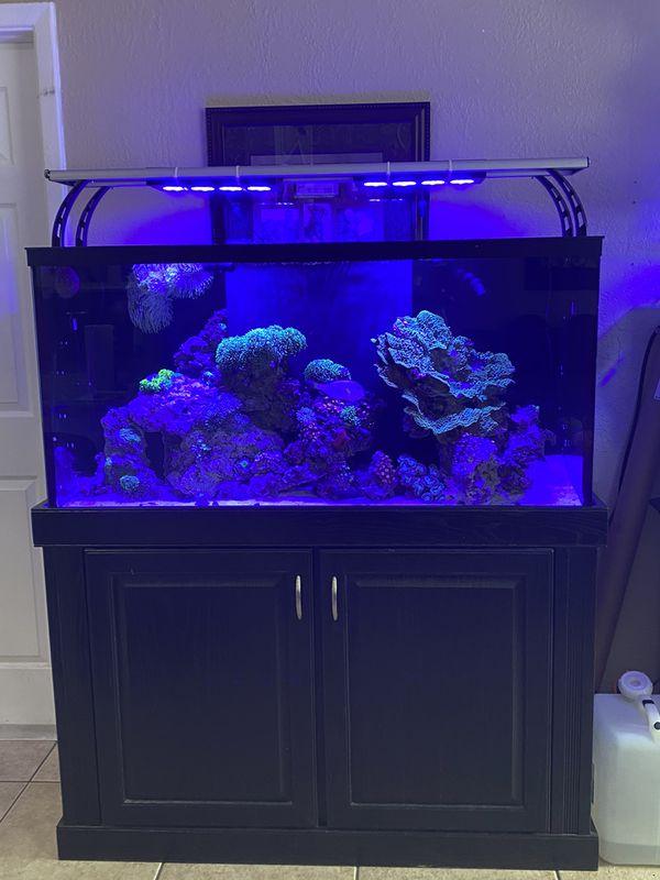 90 gallon star fire glass aquarium