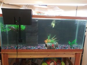 50 gallon tank with accessories for Sale in Holiday, FL