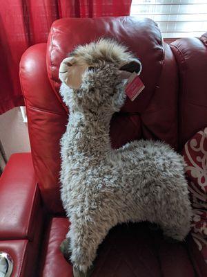 Llama for Sale in Port Richey, FL
