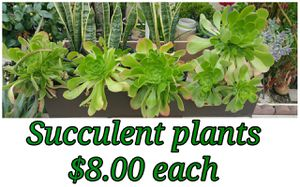 Succulent plants. for Sale in Hacienda Heights, CA