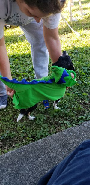 Doggie Dinosaur Halloween costume for Sale in Vinton, VA