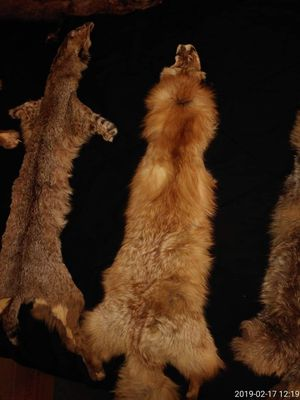 Tanned Pelts for Sale in Rustburg, VA