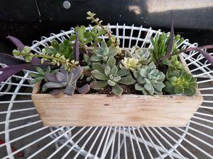 Succulent Arrangement for Sale in Hacienda Heights, CA