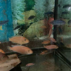 Fish for Sale in South El Monte, CA