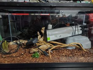Reptile Terrarium for Sale in Chandler, AZ