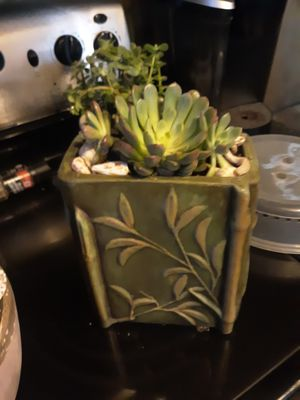 Live succulents in a ceramic container for Sale in Chandler, AZ