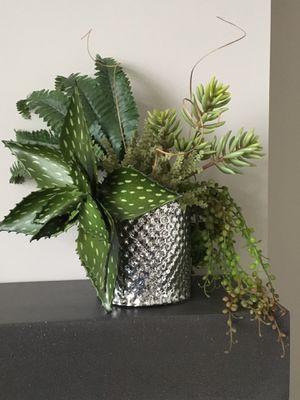 Succulent arrangement for Sale in Minneapolis, MN