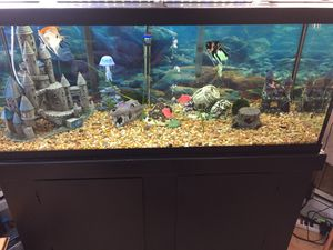 60 Gallon Aquarium Completely Set Up. for Sale in Bath, NY