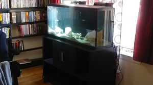 55 gallon gish tank fish and accessories for Sale in Houston, TX