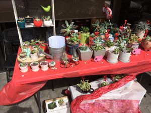 Succulents! for Sale in Austin, TX