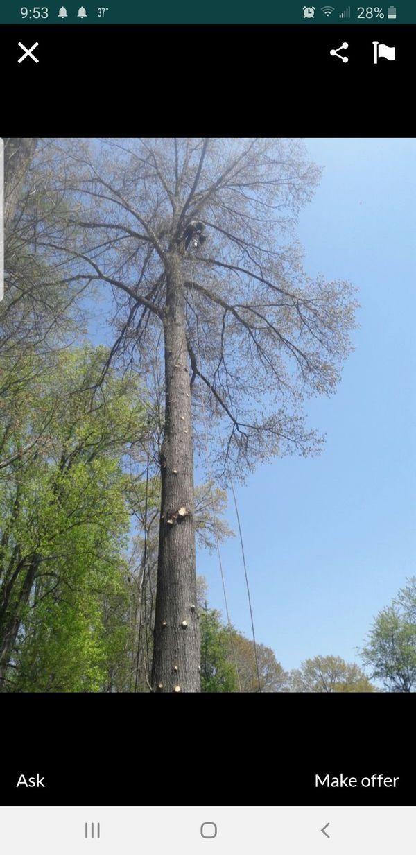 se corta árboles abuen presión