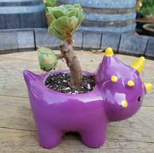 Aeonium tree and Dinosaur planter for Sale in Gilroy, CA