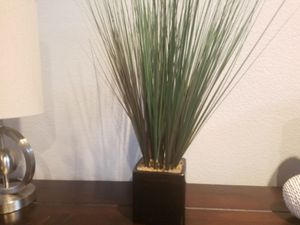 Plant for Sale in Fort Worth, TX