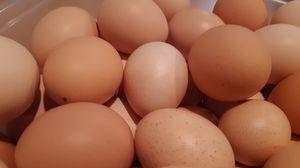 Organic free range eggs for Sale in Graham, WA
