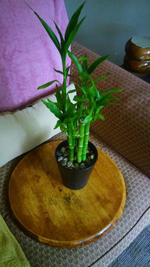Plant Natural Bamboo Attractives leaves End vase the porcelain plant REAL for Sale in Hartford, CT