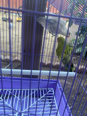 Cage for Sale in Jurupa Valley, CA
