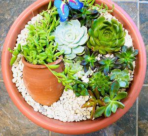 Succulent arrangment on a mini pot for Sale in Montclair, CA