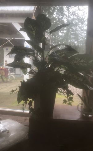 Fake plant for Sale in Newberg, OR