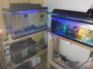 Many fish tanks and stands and a lot of supplies for Sale in Orlando, FL
