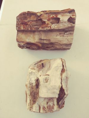 2 LARGE PIECES OF PETRIFIED WOOD FOR SALE for Sale in Pasco, WA