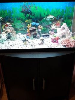 Sweet Water Fish Tank 29 Gallons With Stand, Decorations and Accessories for Sale in Sunol,  CA