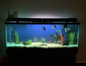 150 gallon drilled aquarium for Sale in Trenton, OH