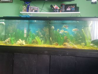 Fish Tank for Sale in Indianapolis,  IN