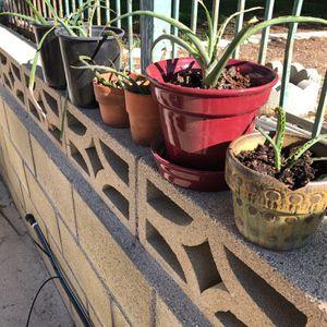Aloe vera for Sale in Murrieta, CA