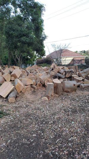 Free eucalyptus wood for Sale in Pomona, CA