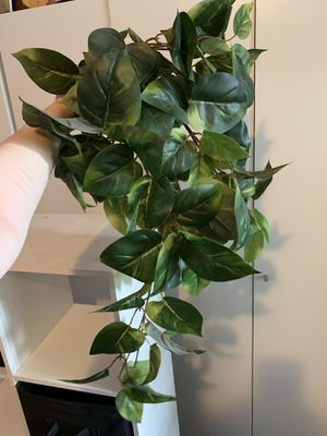 Fake trailing plant for Sale in Puyallup, WA