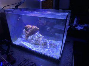 Fluval sea 13.5 for Sale in Norfolk, VA