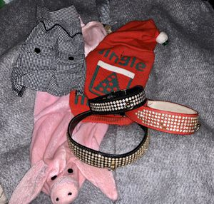 Assorted Dog Collars & Clothes for Sale in Cincinnati, OH