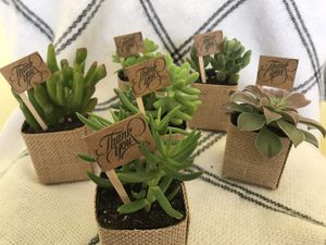 Succulent Plant Party favor for Sale in San Lorenzo, CA