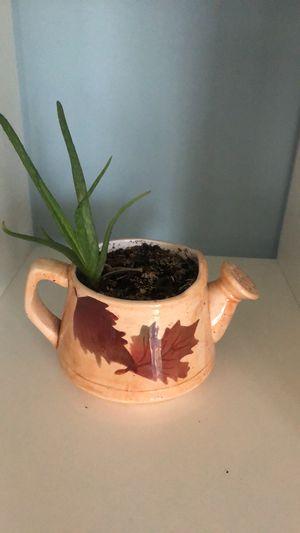 Aloe vera in cute ceramic pot $5 for Sale in Orem, UT
