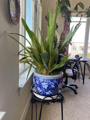 Plant. Gorgeous Porcelain Pot for Sale in Medford, MA