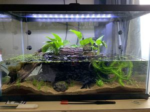 29 gallon Aquarium with lid, light, and filter for Sale in San Diego, CA