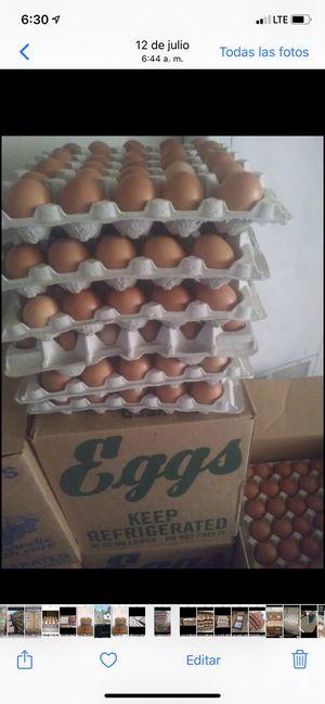 Huevos frescos por caja puesto en su casa en el valle de San Fernando blanco extra large cafes mediano jumbo blanco jumbo cafes for Sale in Los Angeles, CA