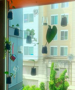 Window suction cup plants & candle holders for Sale in Seattle, WA