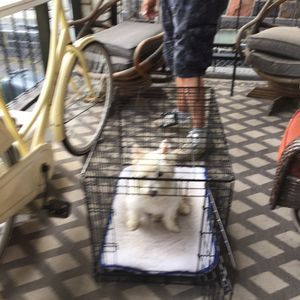 Dog crate small to medium great condition for Sale in Pittsburgh, US