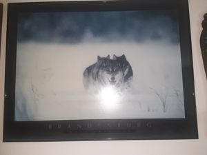 Wolf picture for Sale in Holiday, FL