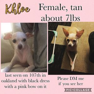 Dog Missing for Sale in San Leandro, CA