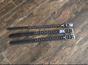 Leaders collars for dogs for Sale in Phoenix, AZ