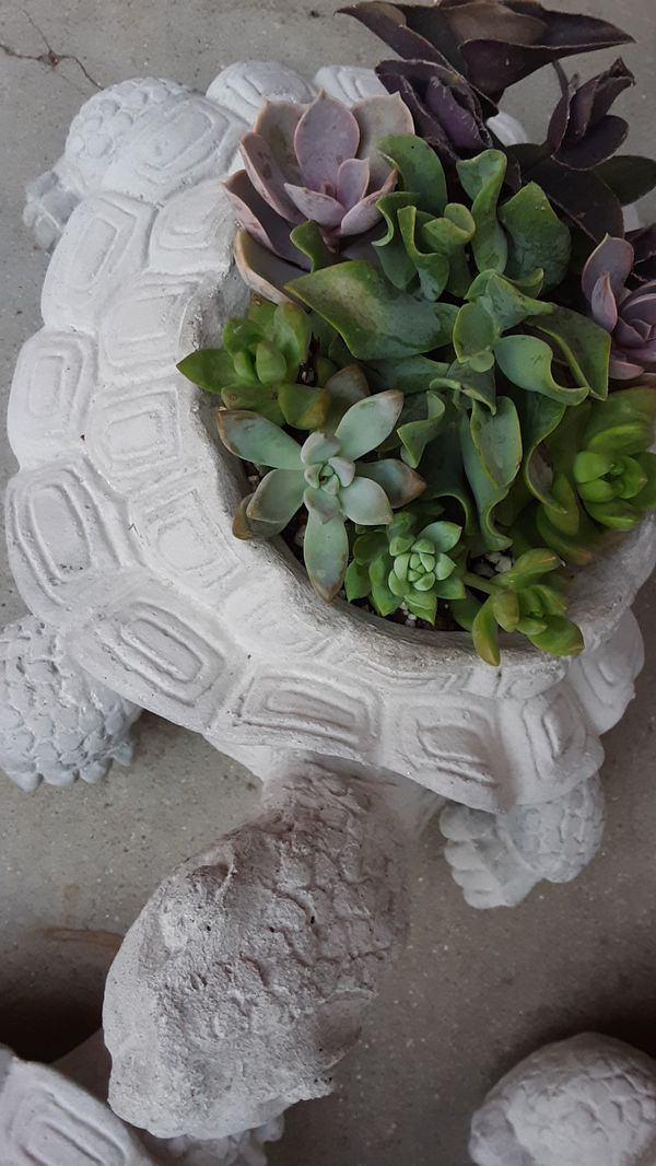 "12"" cement turtle with succulent plants $15"