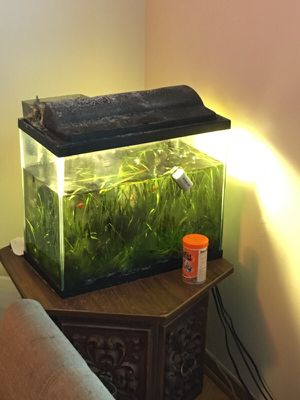 Fish Tank with Plants for Sale in Chicago, IL