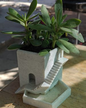 Desktop Succulent for Sale in Wildomar, CA