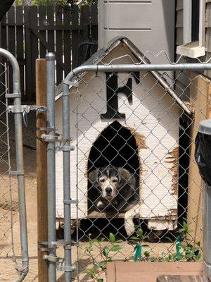 Dog House (dog not included) for Sale in Orange, CA