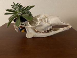 Deer Skull Succulent planter for Sale in Tucson, AZ