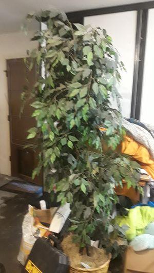 big house plant fake for Sale in Modesto, CA