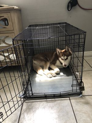 Medium size dog crate with metal tray for Sale in Maitland, FL